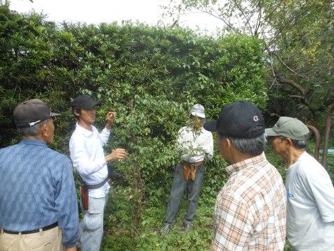 ウメは庭に多く植わっており、参加の方は熱心に聴講されていました