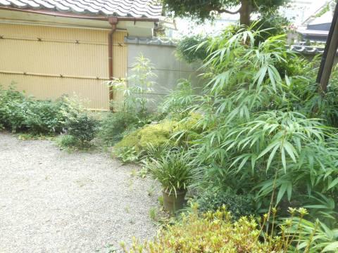 竹虎の庭(中央の虎に見立てた石と竹の庭園)