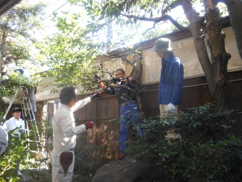 前庭樹木を庭師の助言で剪定を行う参加者【施工前】