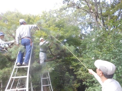 講師から指示竹で剪定指導をして頂いております。