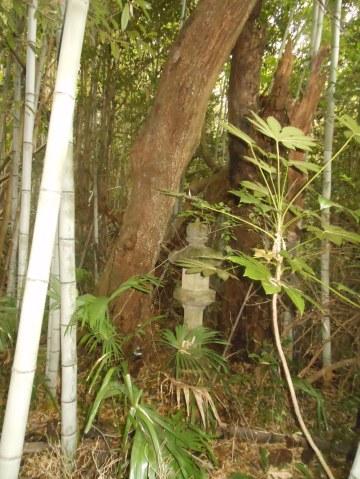 樹木繁茂により庭園景観が変化している